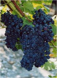 vignoble-et-terroir2.jpg